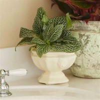 Best Houseplants For Low Light Rooms